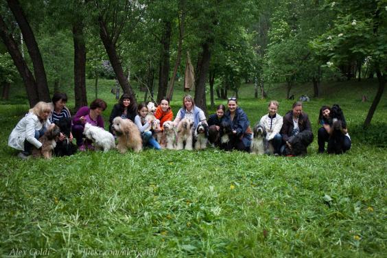 Совместные прогулки Тибетских терьеров в Москве. Осень.