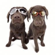 Клуб любителей собак в Москве