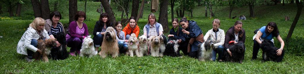 Совместные прогулки Тибетских терьеров в Москве.